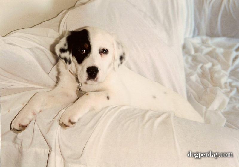 Abby-puppy-2