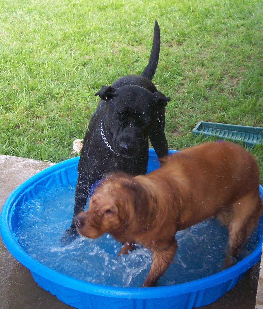 Two Dogs, One Pool