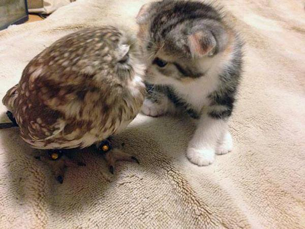 Cat and Owl Friends