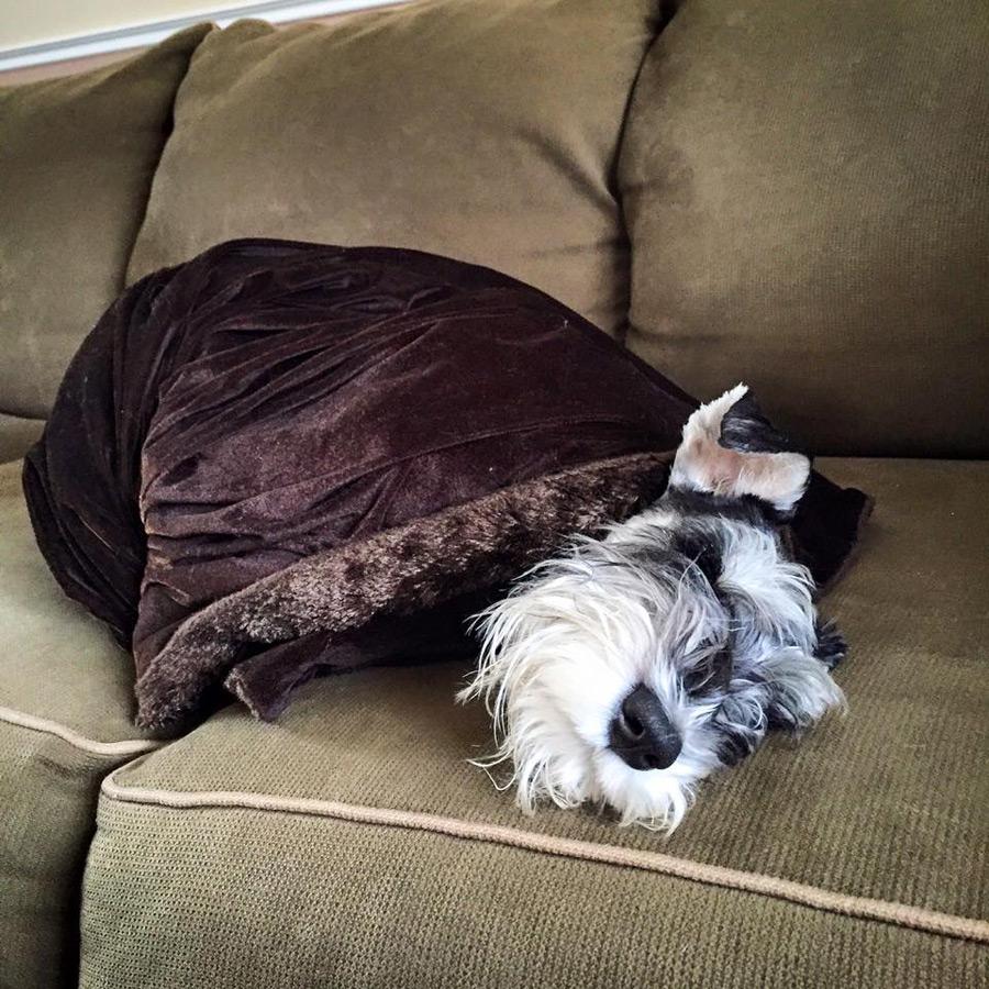 Chumpie in a Blanket