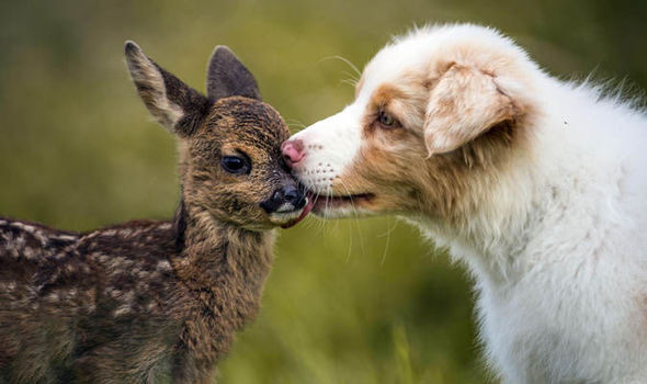 Puppy with Fawn