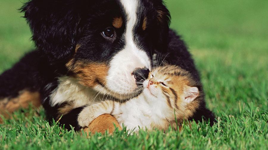Puppy with Kitten