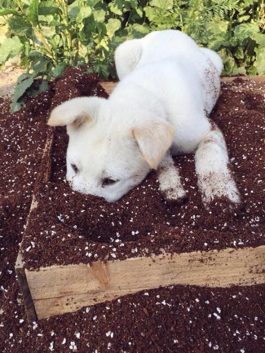Puppy Playing in Garden