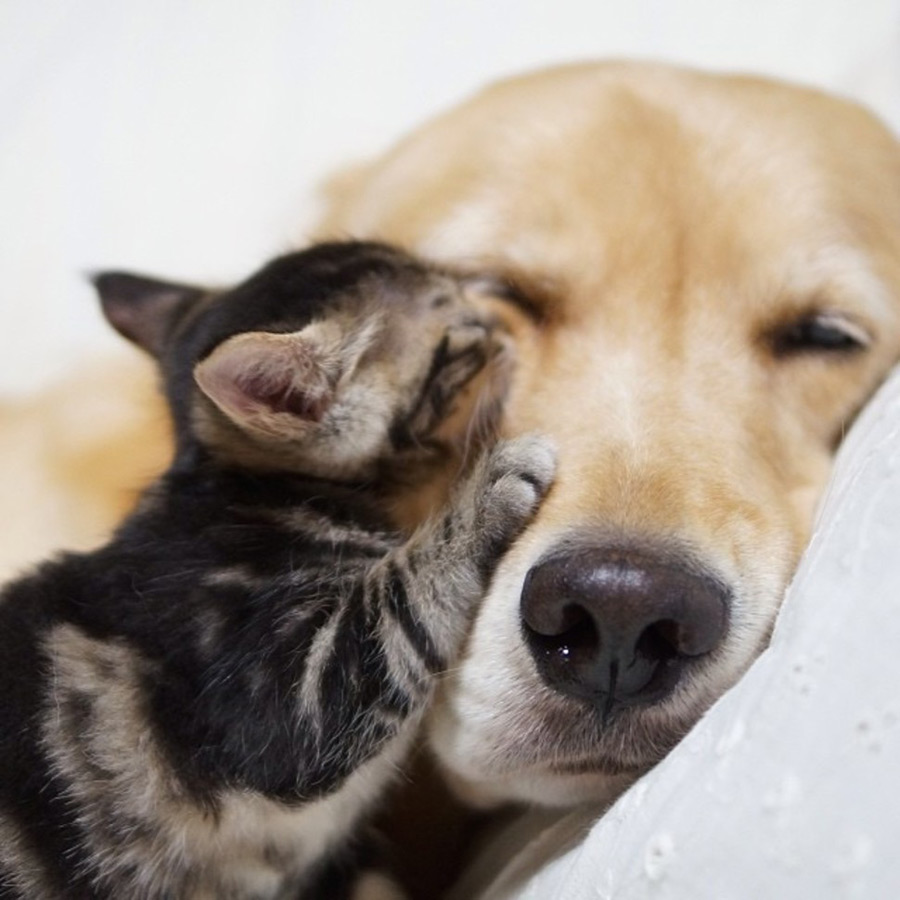 Dog and Kitten