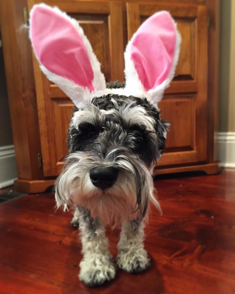 Easter Chumpie