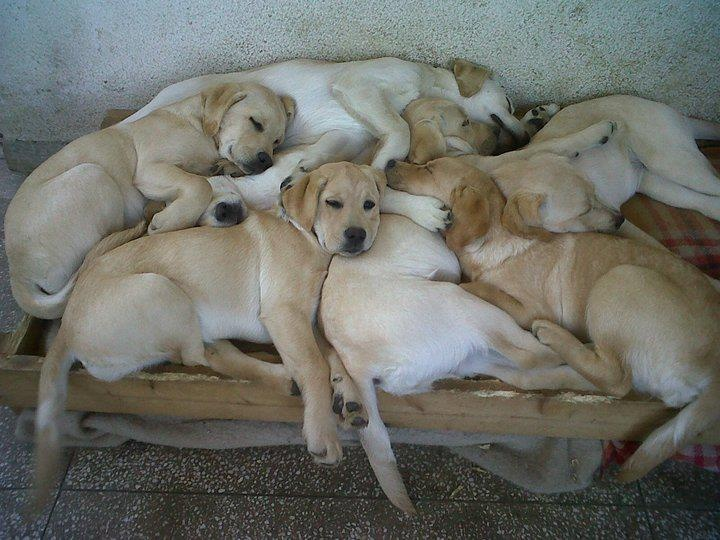 Pile o Puppies
