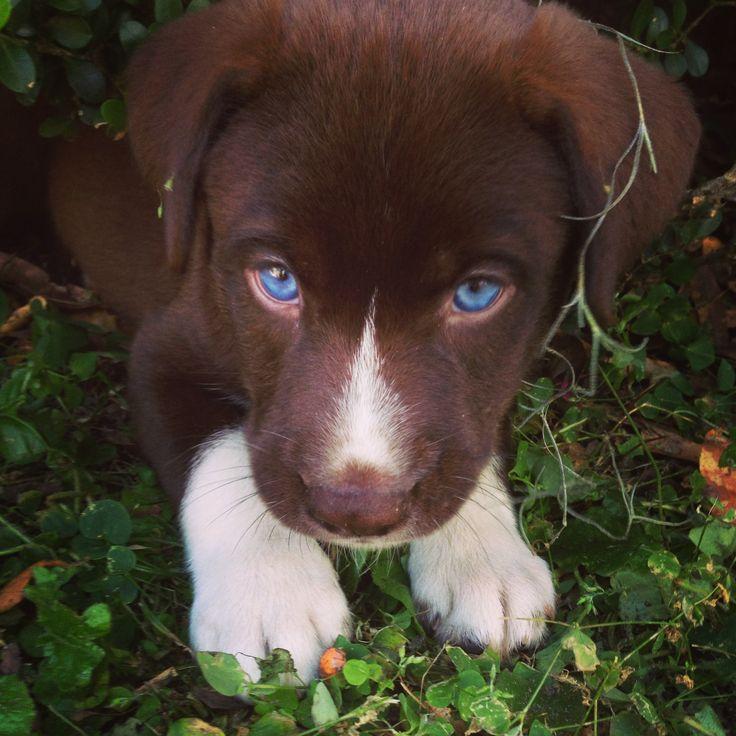 Blue-Eyed Puppy