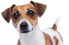 Pet Myths