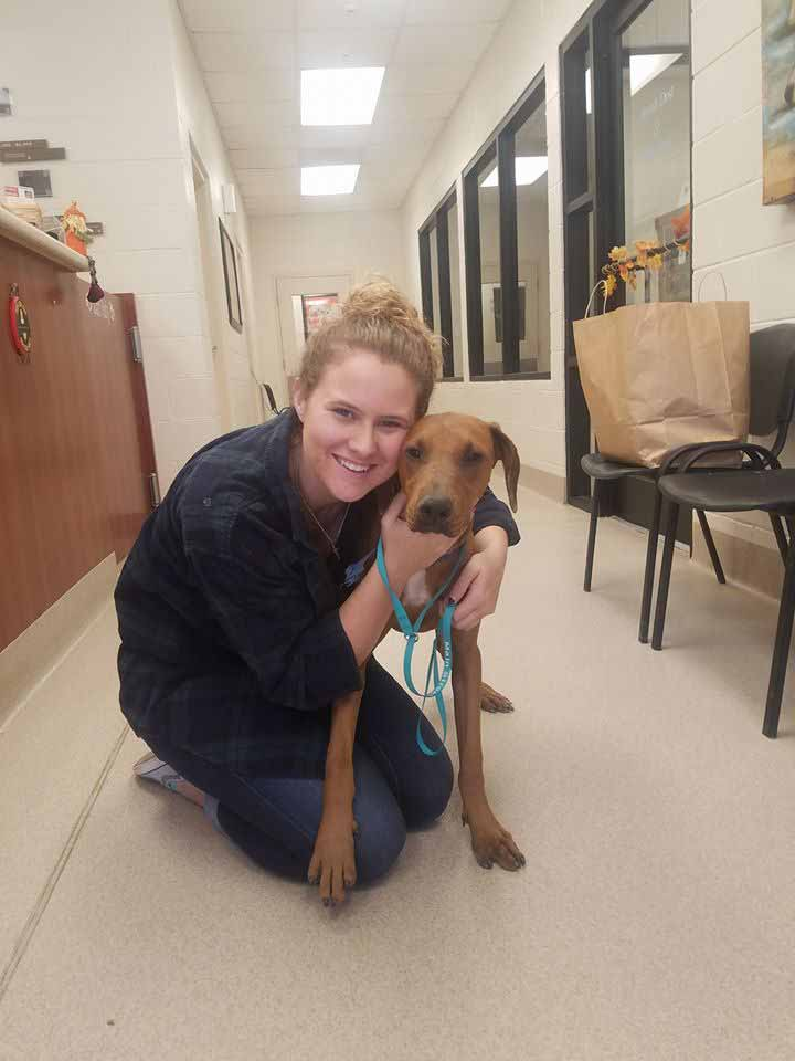 Mabel the Coonhound adopted